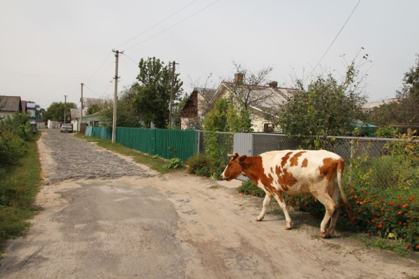 A street in Berezne